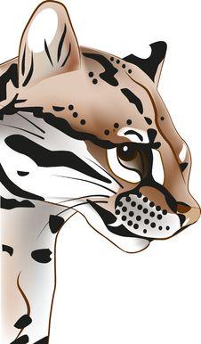 Free Tiger Stock Photo - 22720240