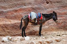 Free Male Donkey And Dog On Rock Wall Background Stock Image - 22722781