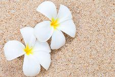 Free Frangipani Flower On Sand Royalty Free Stock Photo - 22725355