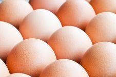 Free Eggs Royalty Free Stock Images - 22725549