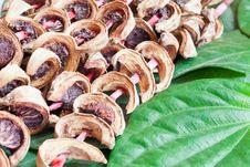 Free Dried Areca Nut Royalty Free Stock Photos - 22725588