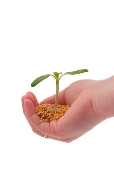 Free Young Sprout In The Hand Stock Photography - 22726272