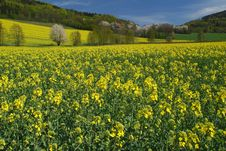 Free Spring Landscape Royalty Free Stock Photos - 22728498