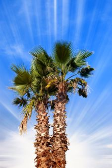 Palm Under Blue Sky Stock Images