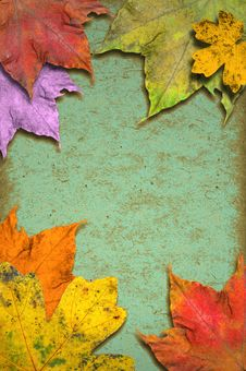 Free Grunge Background With Leaves Royalty Free Stock Images - 22729939