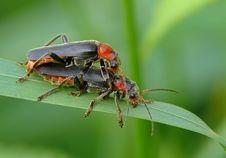 Free Beetles Stock Photo - 22730490