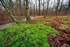 Free Forest With Colorful Leaves And Moss Stock Photography - 22730642