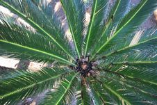 Free Palms Leaves Stock Image - 22731781