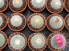 Free Cacti Grow House - Detail Stock Image - 22737911