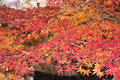 Free Autumnal Leaves Stock Photography - 22740962