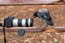 Free Raven And Dslr Stock Photos - 22741333