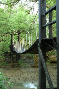 Free Bridge In Mangrove Conservation Center Royalty Free Stock Photo - 22742995