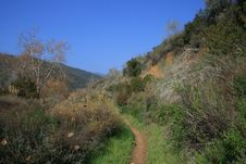 Free Zuma Canyon Foliage Stock Photography - 22743392