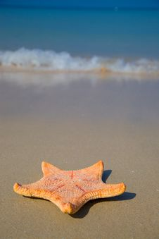 Free Starfish On Beach Stock Images - 22745844
