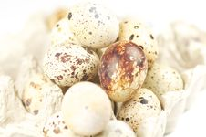 Free Quail Eggs Royalty Free Stock Image - 22747026