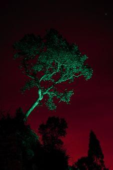 Free Solitary Tree Stock Photo - 22751480