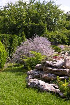 Free Decorative Plants Royalty Free Stock Image - 22756036