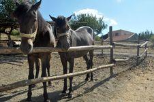 Free Horses Royalty Free Stock Photos - 22757068