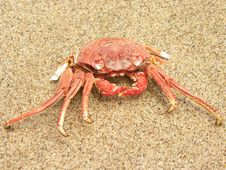 Free RED CRAB Royalty Free Stock Images - 22764059