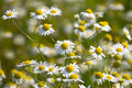 Free Pharmacy Daisies Stock Images - 22778944