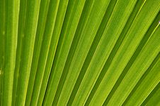 Free Palm Leaf Stock Image - 22777211