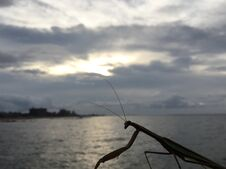 Mantis During Sunrise After Rain In August At Coney Island In Brooklyn, New York, NY. Stock Photo