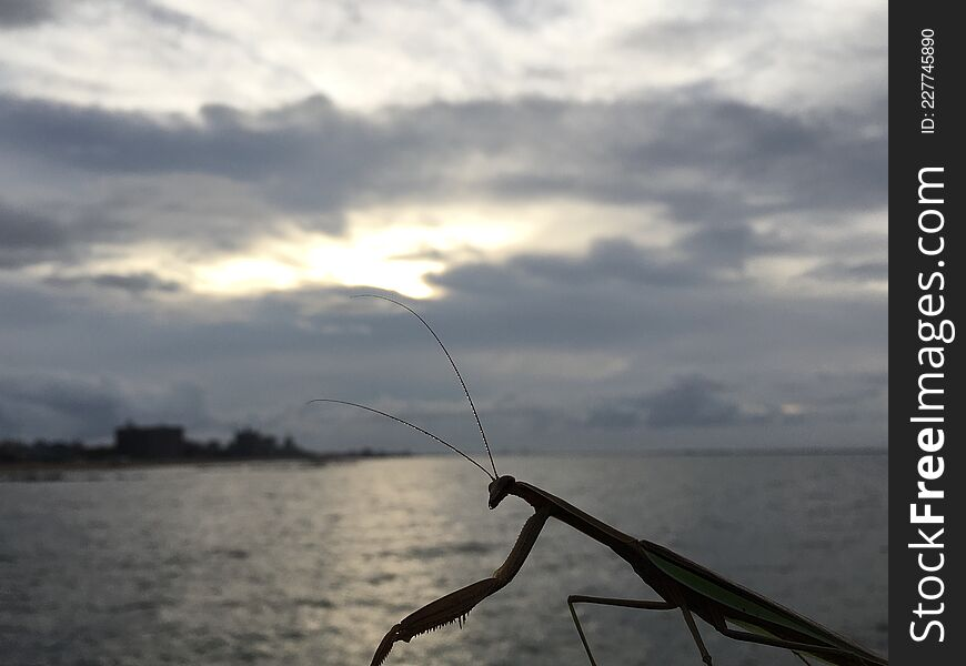 Mantis during Sunrise after Rain in August at Coney Island in Brooklyn, New York, NY.