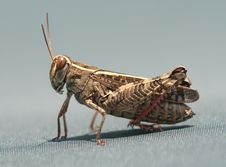 Free Super Macro Of A Grasshopper Stock Photography - 22788142