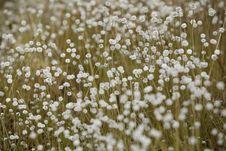 Free Kradumngen Flower Stock Photo - 22789750