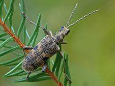 Free Beetle Stock Image - 22791441