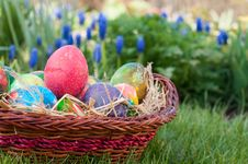 Free Easter Eggs Hunt Royalty Free Stock Photo - 22797495