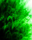 Free Textured Green Abstract 8 Stock Photography - 2283202