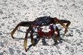 Free Crab Royalty Free Stock Photos - 2286008