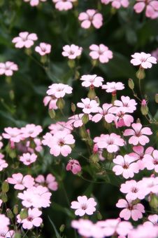Free Small Flowers Royalty Free Stock Photo - 2280225