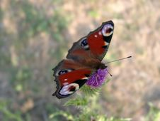 Free The Beautiful Butterfly Stock Photography - 2280562