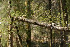 Free Break Tree Stock Photography - 2281462