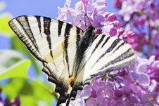 Free Butterfly Stock Photography - 2281492