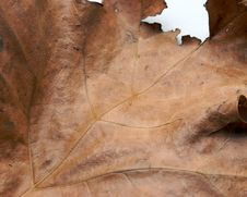 Free Brown Leaf Stock Photo - 2283430
