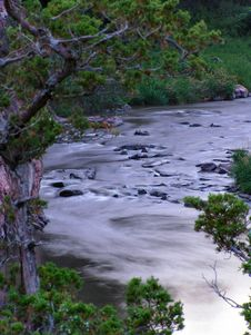 Free River Rapids Under Branches Stock Images - 2283454