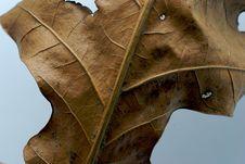 Free Brown Leaf Stock Photos - 2283463