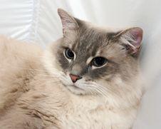 Free Cat Stock Image - 2283671