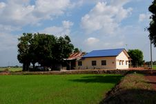 Trees, Farm House, Paddy Field Royalty Free Stock Images