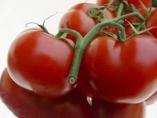 Free Branch Of Tomatoes Stock Photography - 2285002