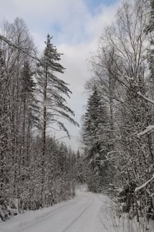 Free Snow Forest Stock Image - 2285081