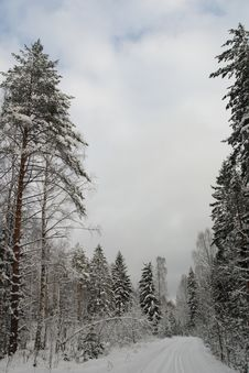 Free Snow Forest Royalty Free Stock Images - 2285089