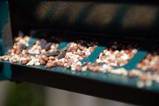 Free Bird Seed Stock Image - 2285271