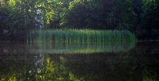 Free Reflections On A Pond Royalty Free Stock Photos - 2287618
