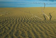 Dead Branches In Dune Stock Images