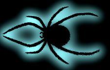 Free Black Spider. Royalty Free Stock Photos - 2289548