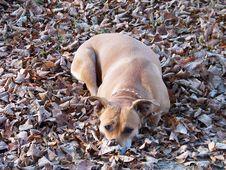 Free Depressed Dog Stock Photography - 22805612